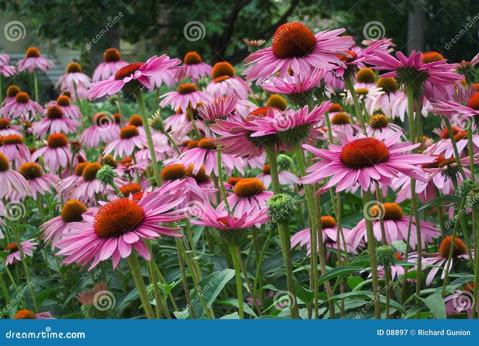Pełny kwiat