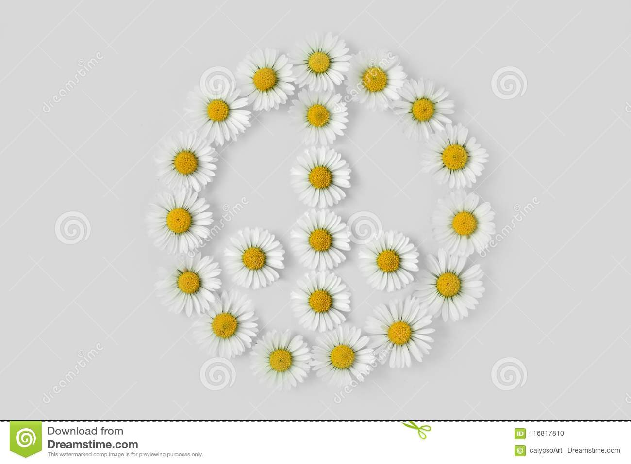 Peace Symbol Made Of Daisies Flower Stock Photo Image Of Design