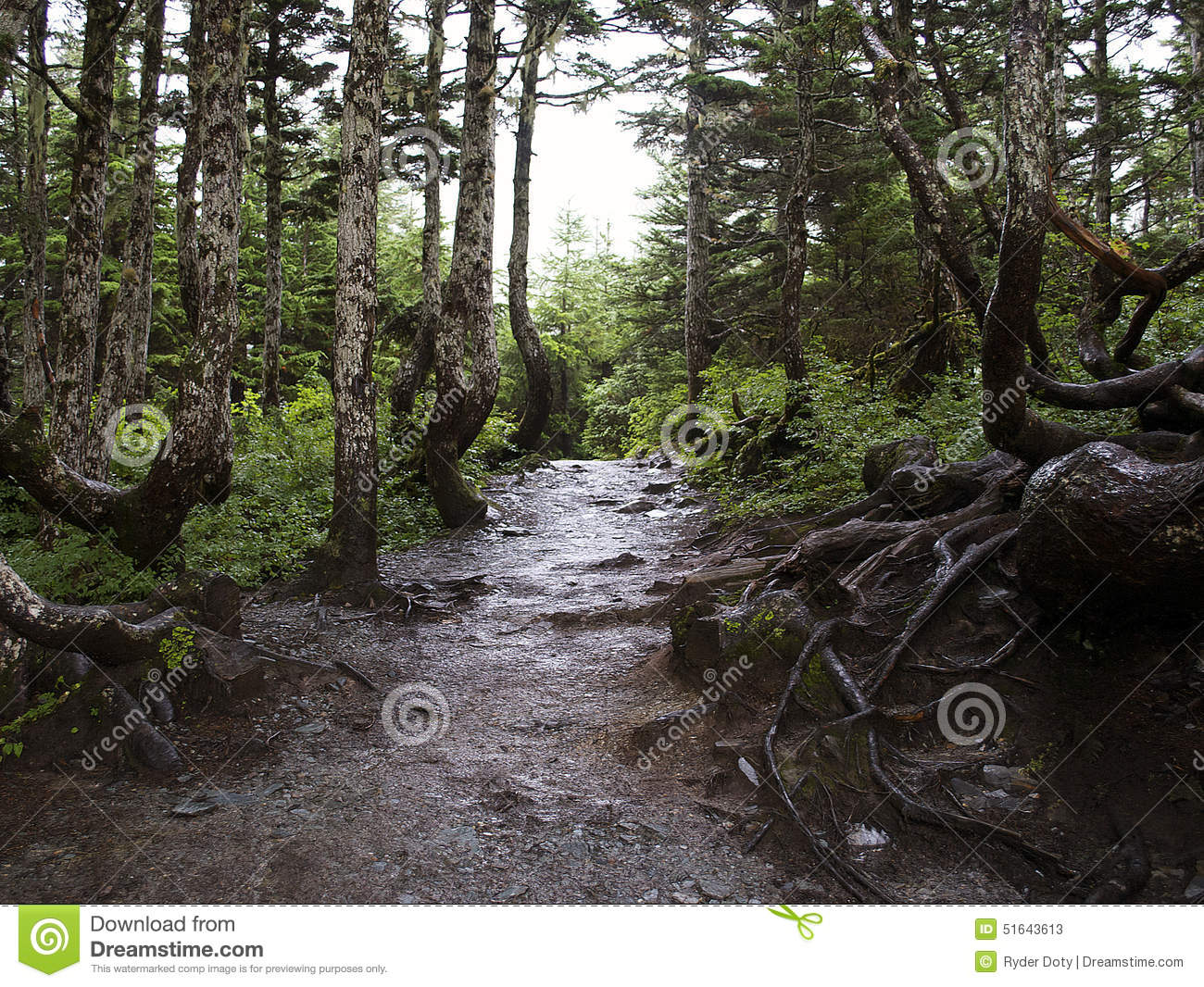 Peaceful Forest Mountain Trail