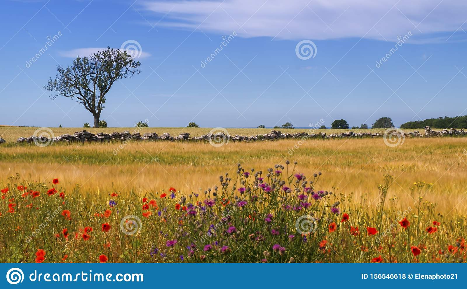Peaceful landscape by beautiful day in Oland island, Sweden