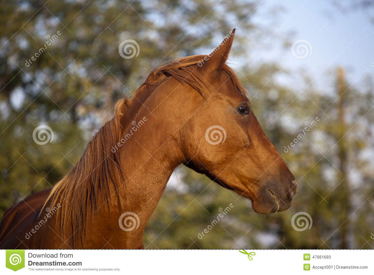 Peaceful Mare Horse Head Shot Side View Summertime Stock Image Image Of Livestock Heritage 47661693
