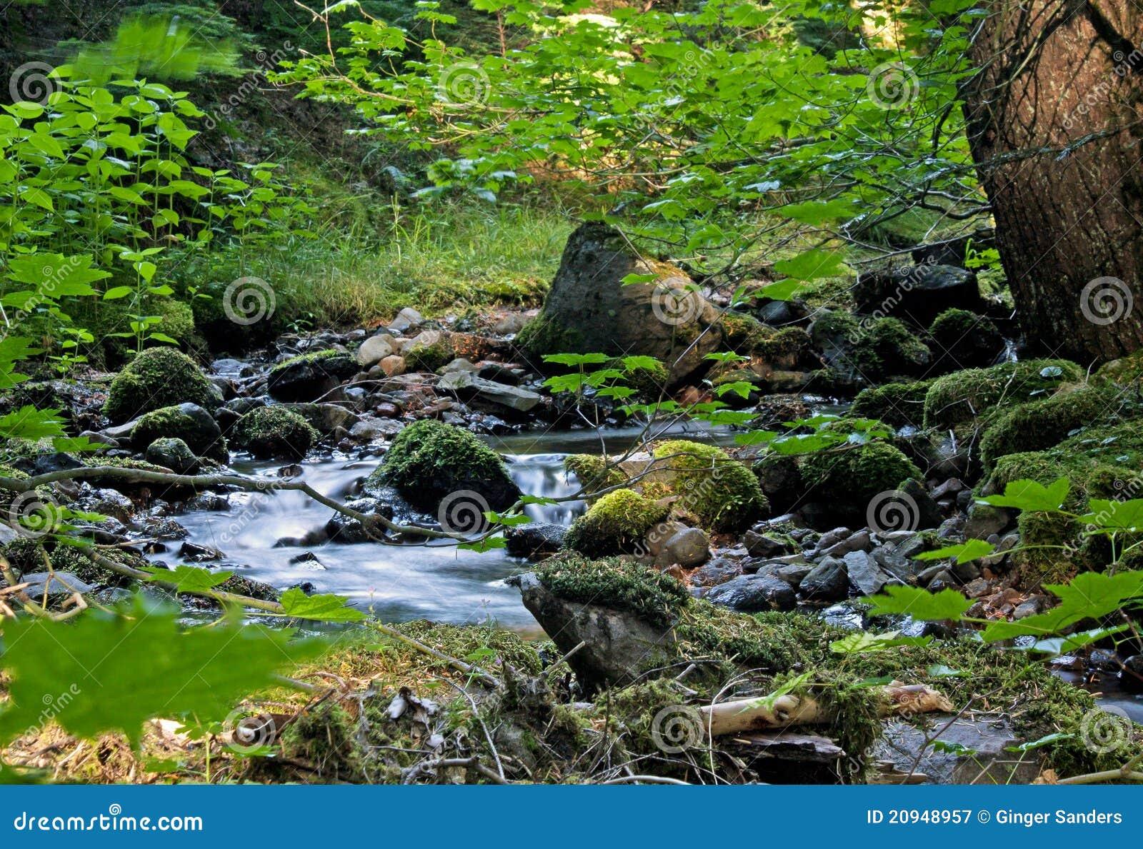 Peaceful Mountain Stream With Lush Greenery
