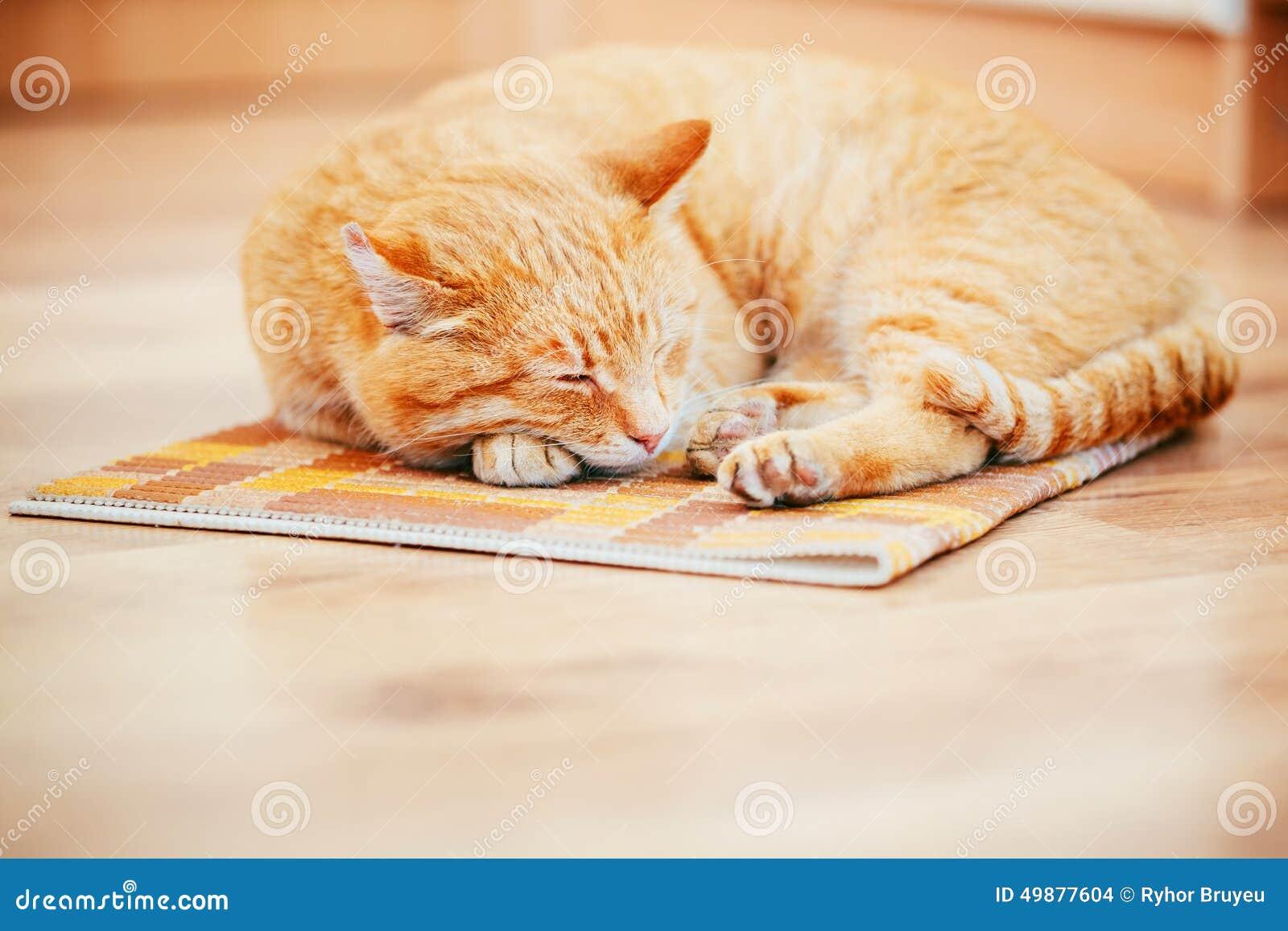 Peaceful Orange Red Tabby Cat Male Kitten Sleeping