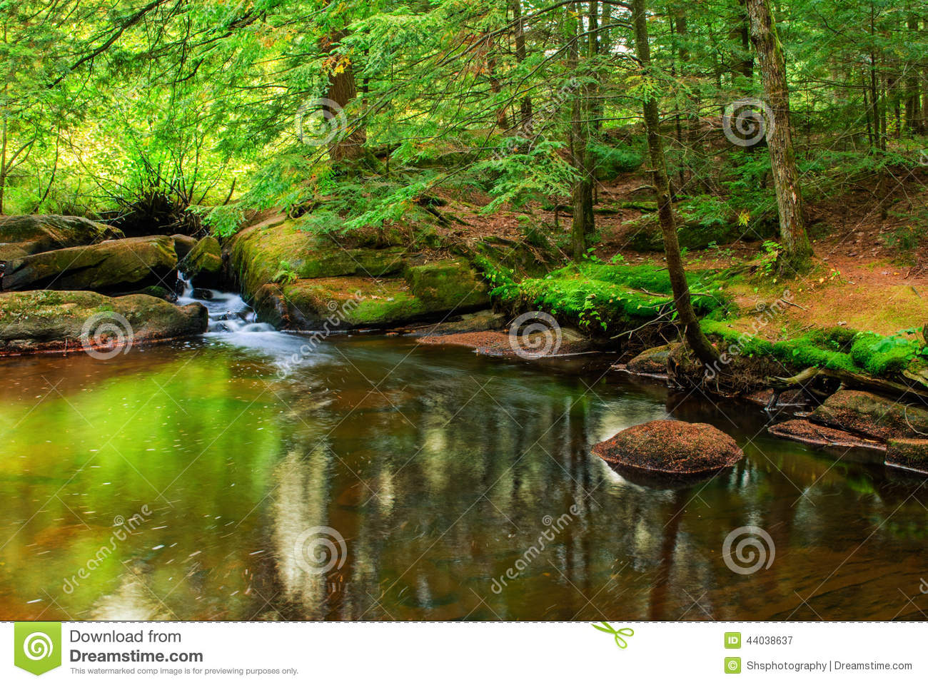 Backyard Forest Management :  scene of a pond with a small waterfall in a lush green forest