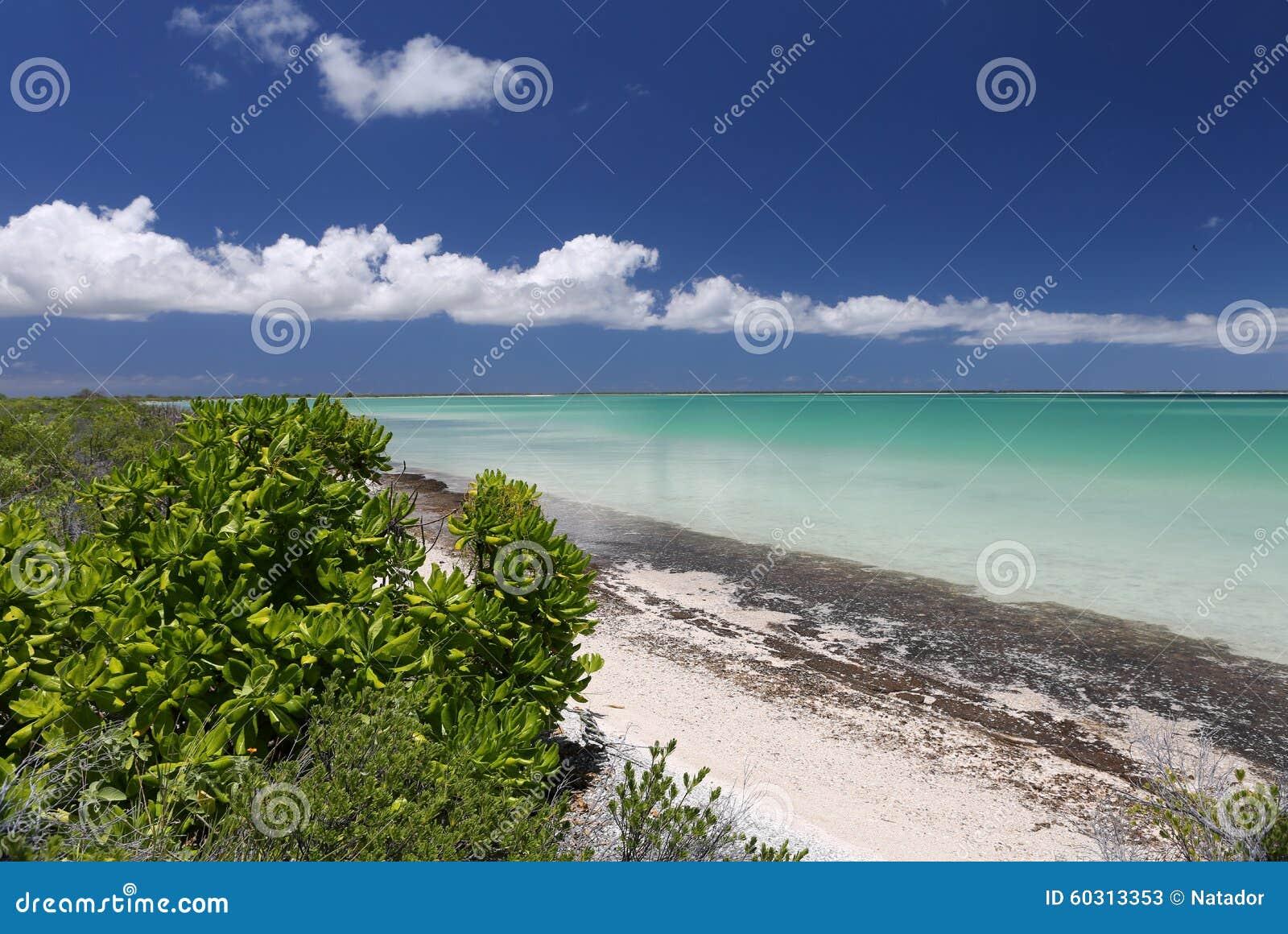 Lagoon Tropical Island: Tropical Island In Turquoise Water Lagoon Stock Image
