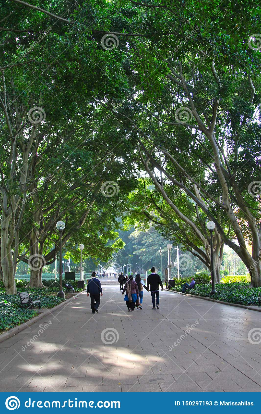 A peaceful view of Hyde Park Sydney