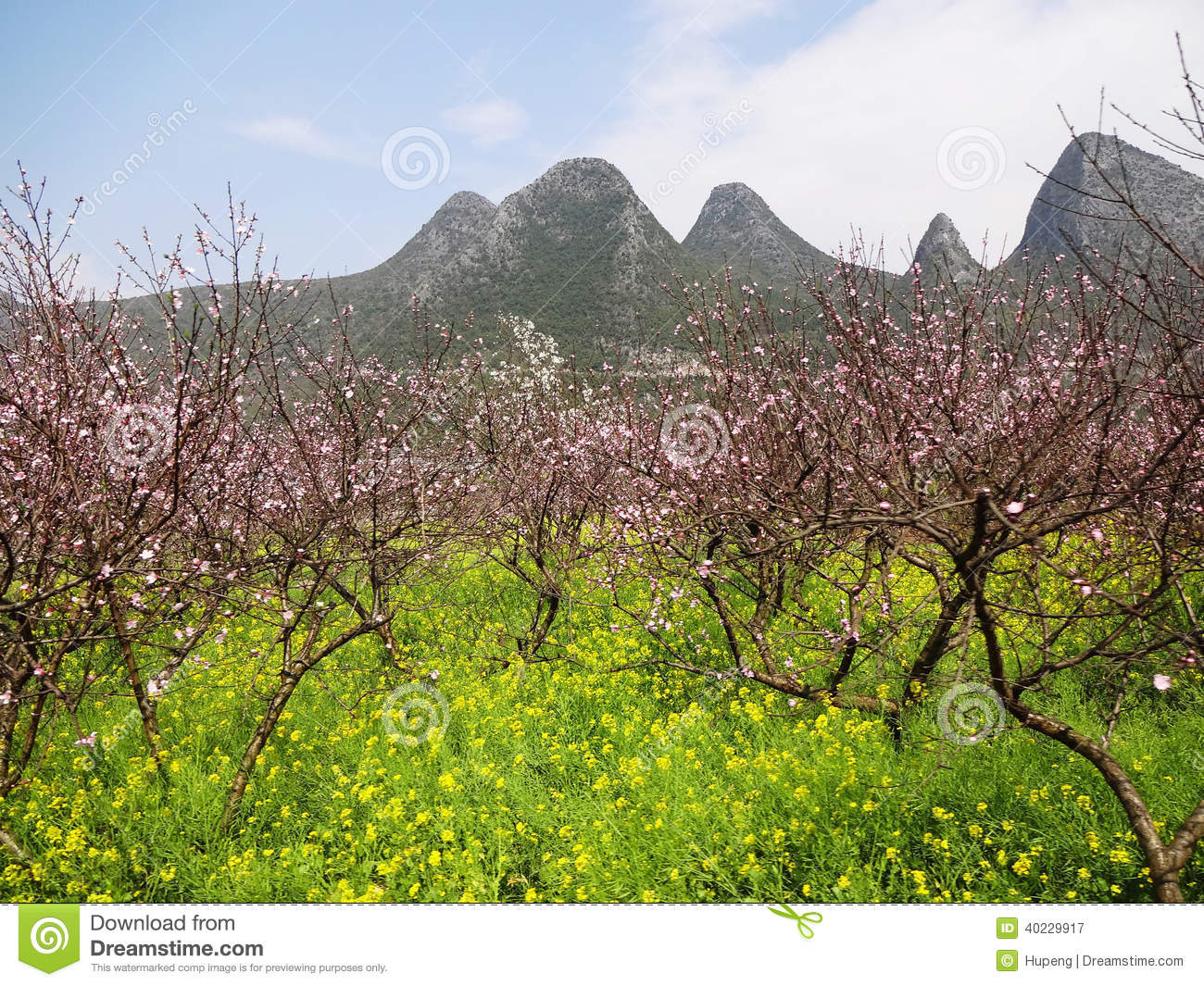 Peach blossom with flowers