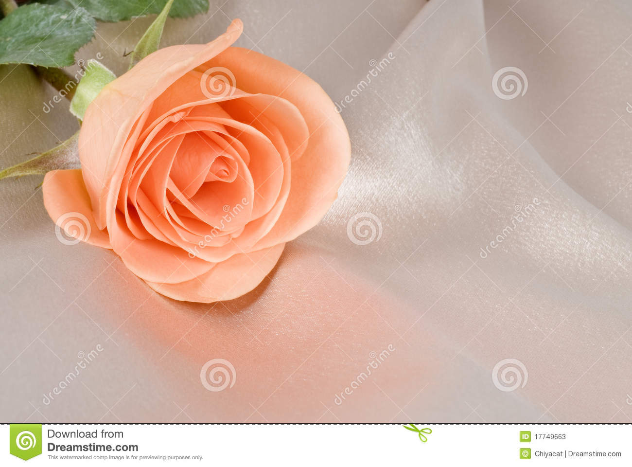 Peach colored rose on beige satin background stock photos image