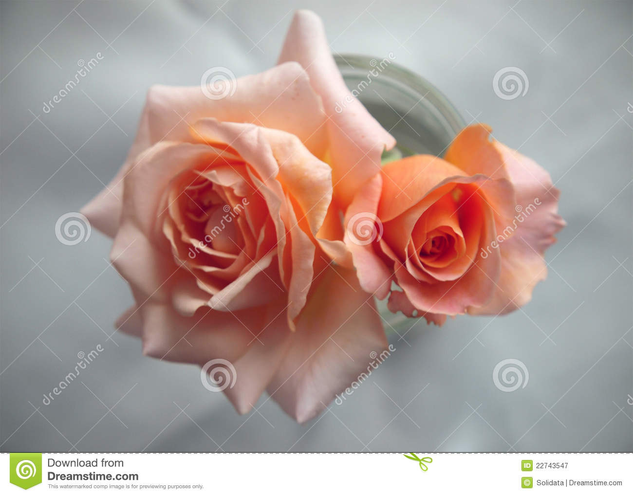 Peach Colored Roses For Wedding Invitation Stock Image - Image of ...