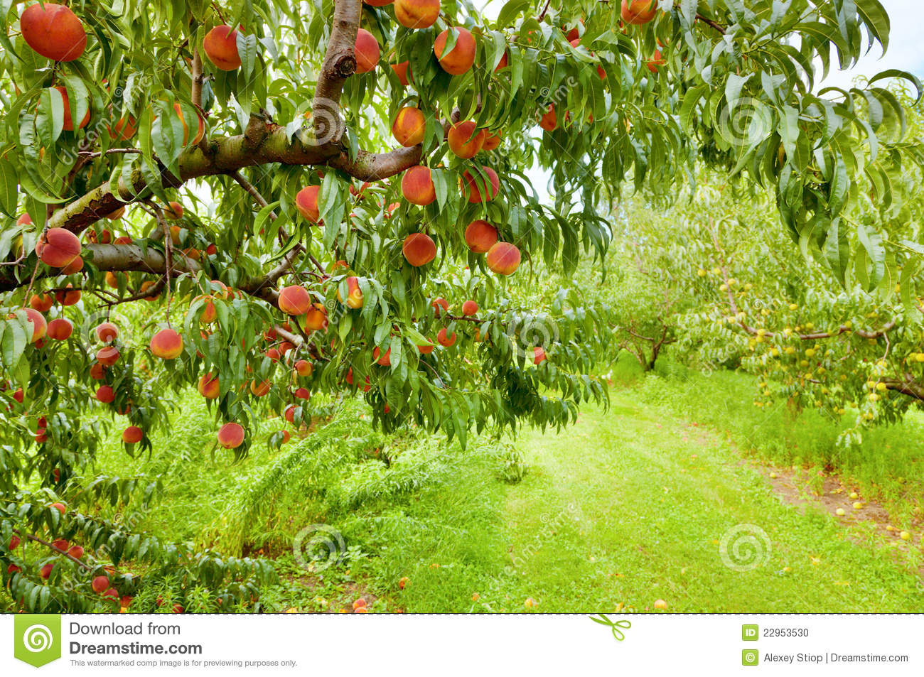 peach orchard divorced singles Singles meetups in jasper here's a look at some singles meetups happening near jasper sign me up  jaemor peach orchard.