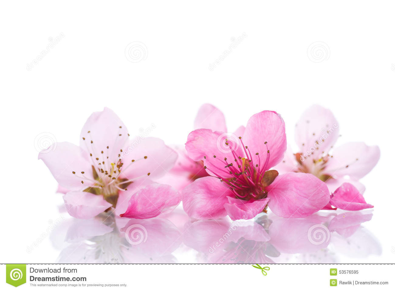 Peach Pink Flowers Stock Image Image Of Mother Flower 53576595