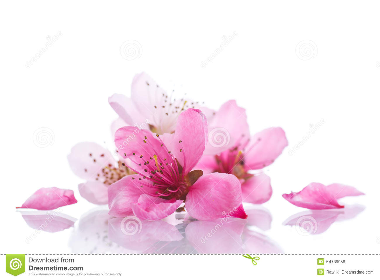Peach Pink Flowers Stock Photo Image Of Background Outdoor 54789956