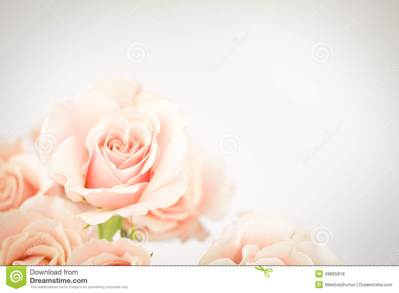 Peach Rose Cluster With Vignette Stock Photo Image Of