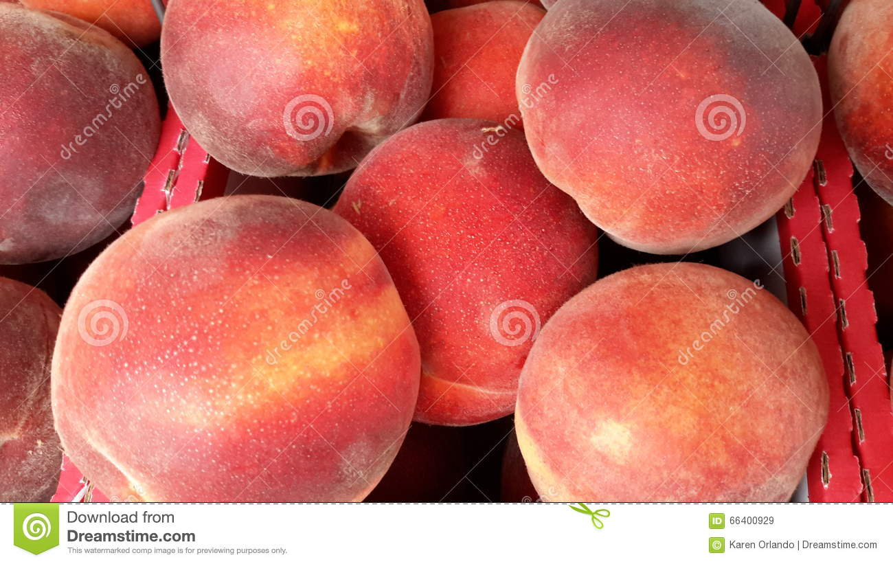 home grown freaks stock image image of fruit homegrown farmers 713