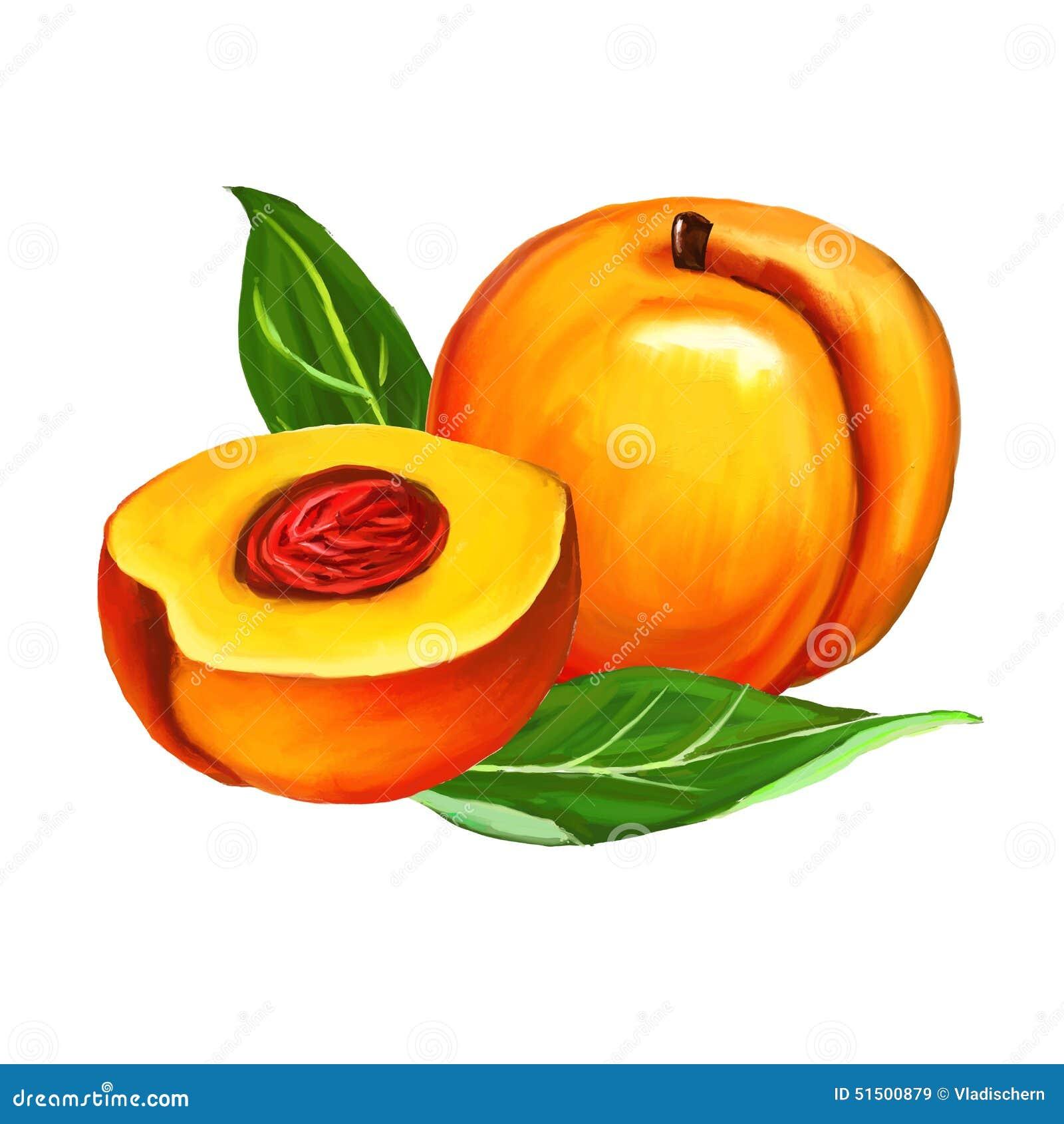 Peaches Set Vector Illustration Hand Drawn Stock Vector