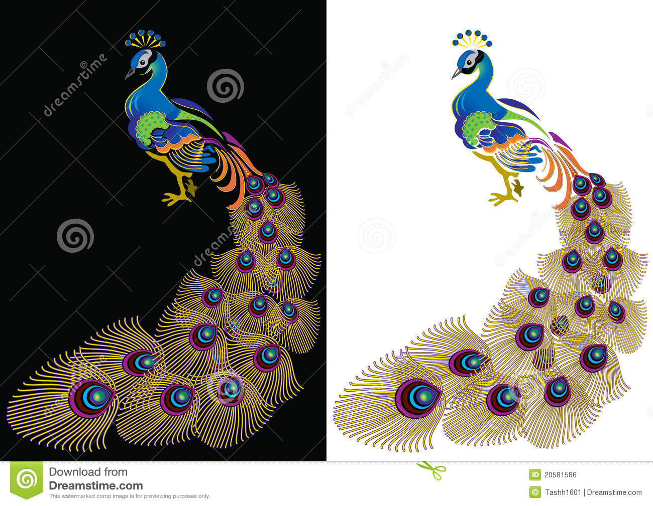 Peacock Royalty Free Stock Image Image 20581586