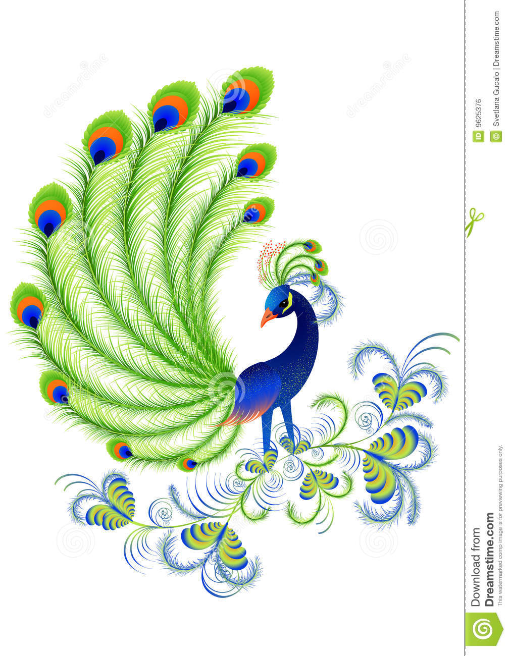peacock stock vector  illustration of beautiful  vector