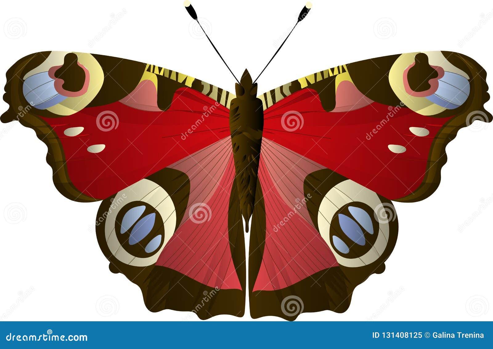 Peacock Eye Butterfly Aglais Io Inachis Io Nymphalidae