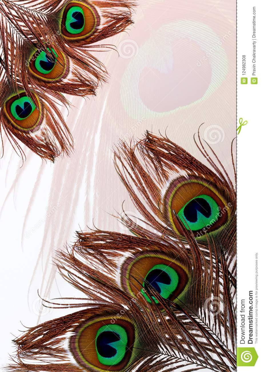 Peacock fathers with abstract vector multicolored textured shaded Background. Vector Illustration.