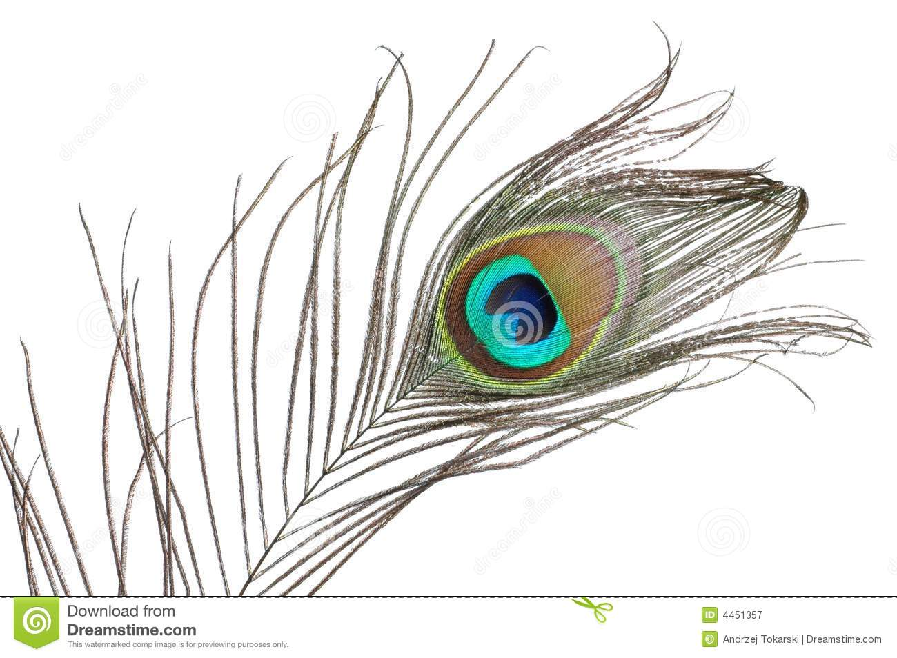 Peacock Feather Royalty Free Stock Photography - Image: 4451357