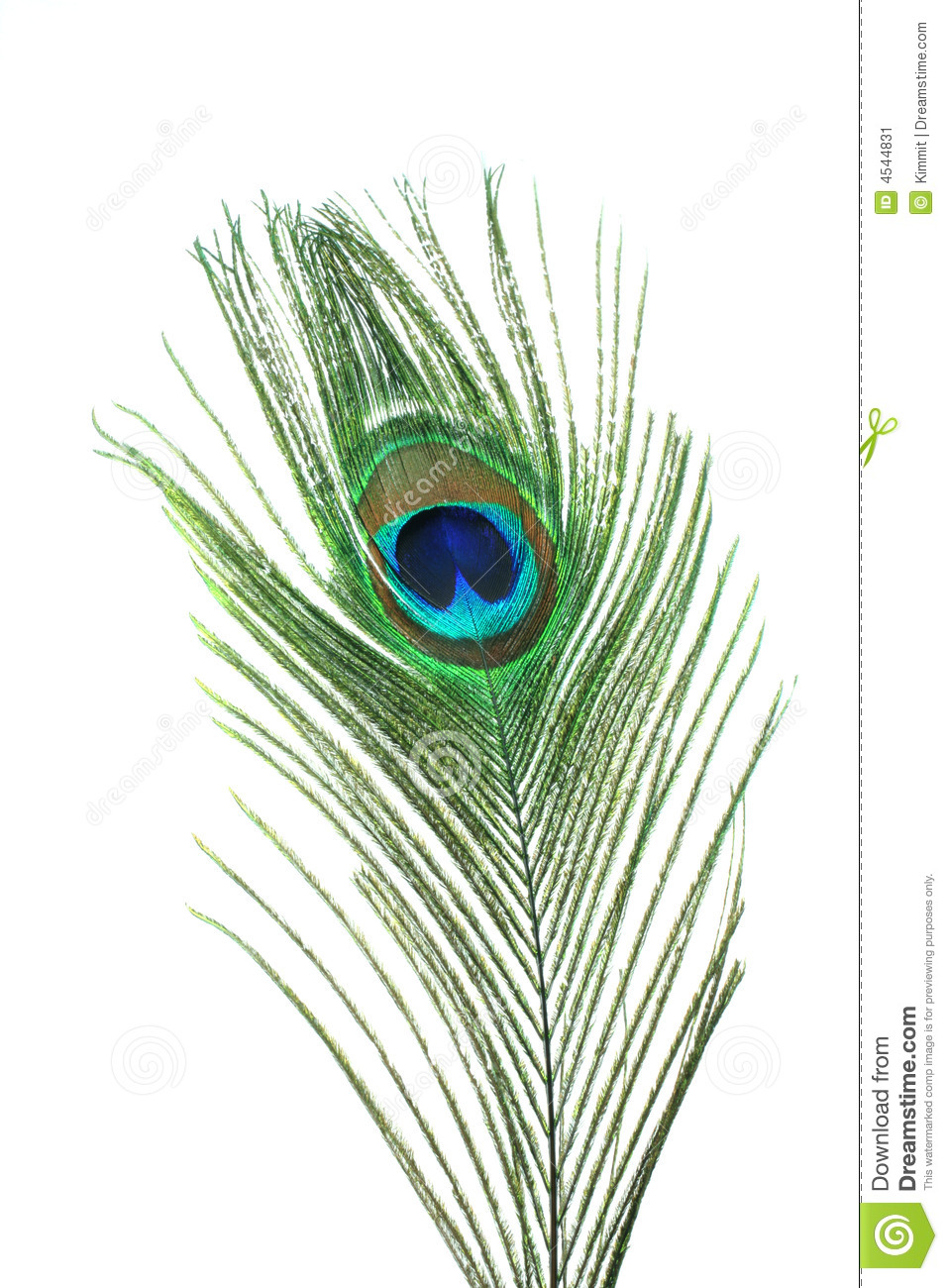 peacock feather stock image  image of fancy  plumage