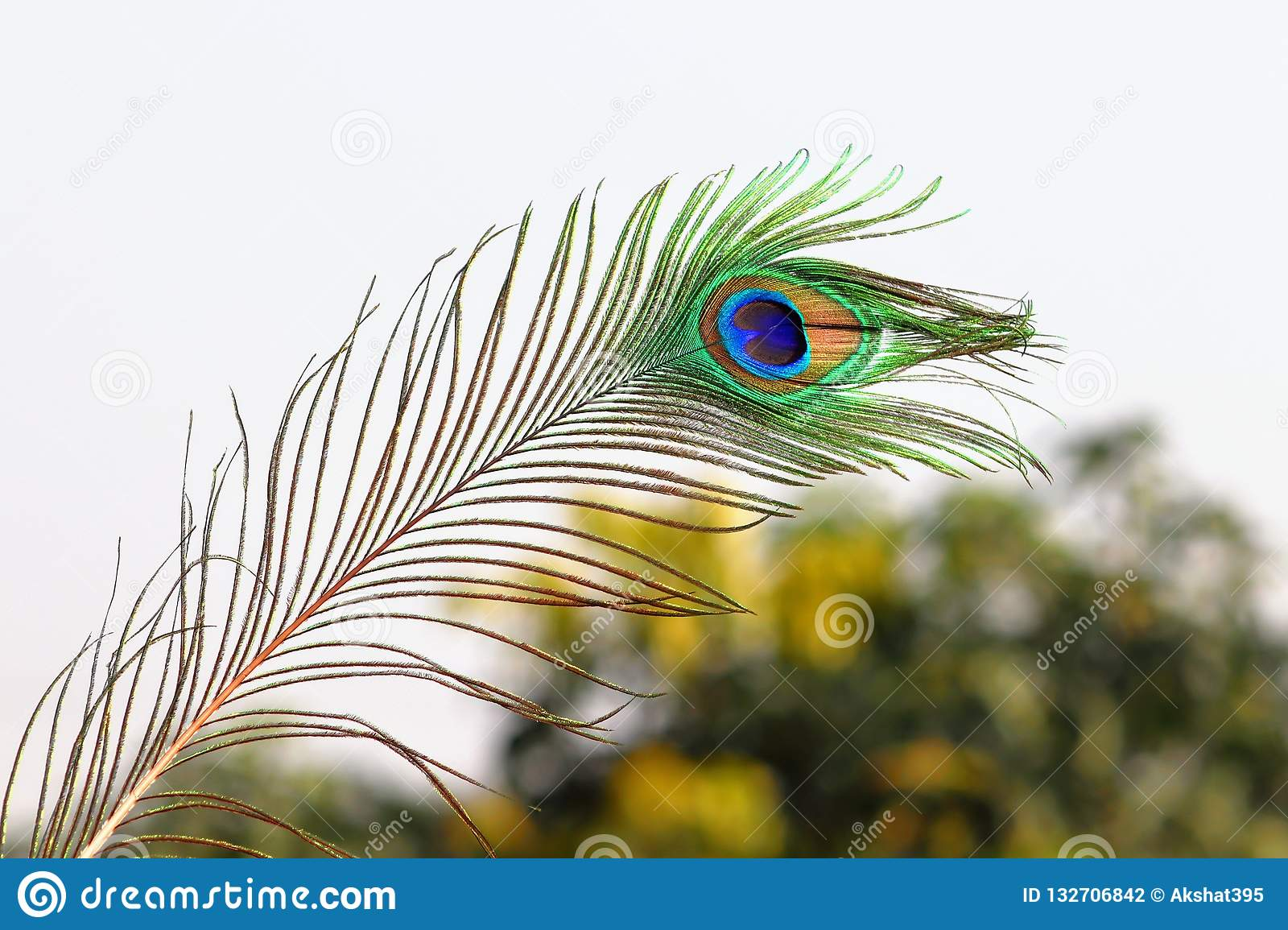 Peacock Feather Stock Photo Image Of Colours Beautiful 132706842