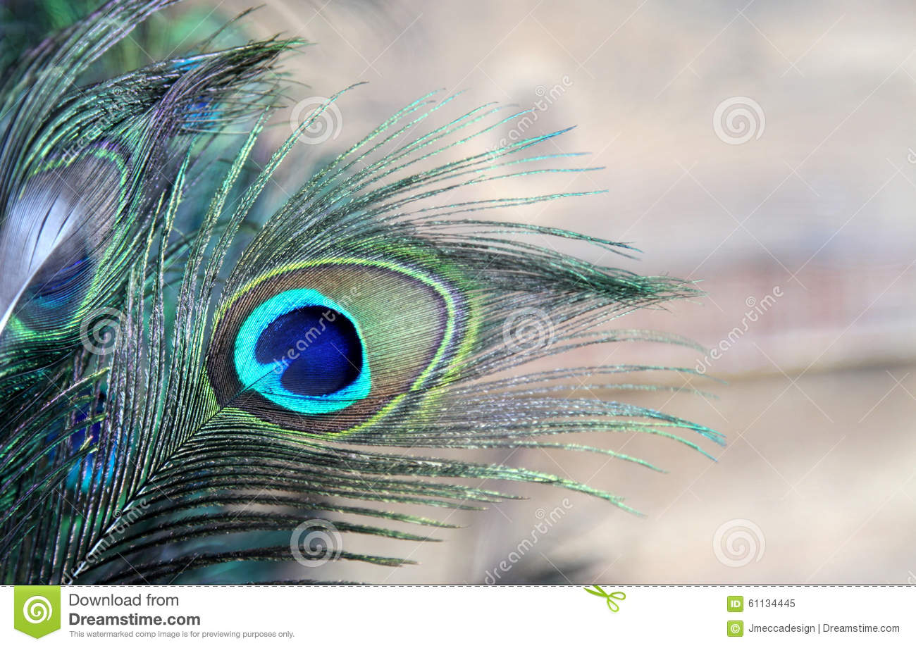 Peacock Feather Blue And Green Stock Image - Image of bird ...