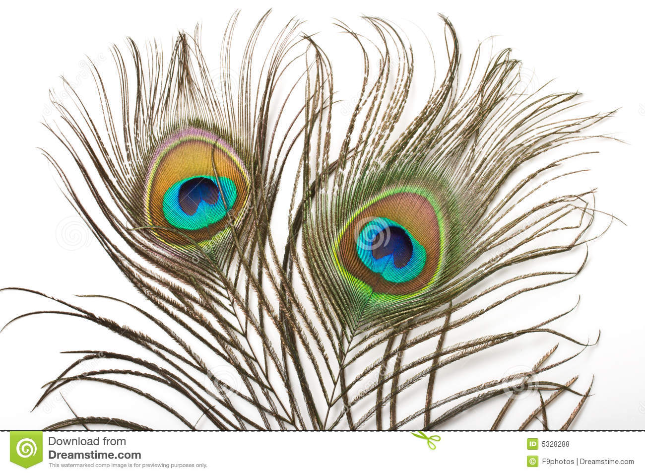 Peacock Feather Close Up Royalty Free Stock Photos - Image: 5328288