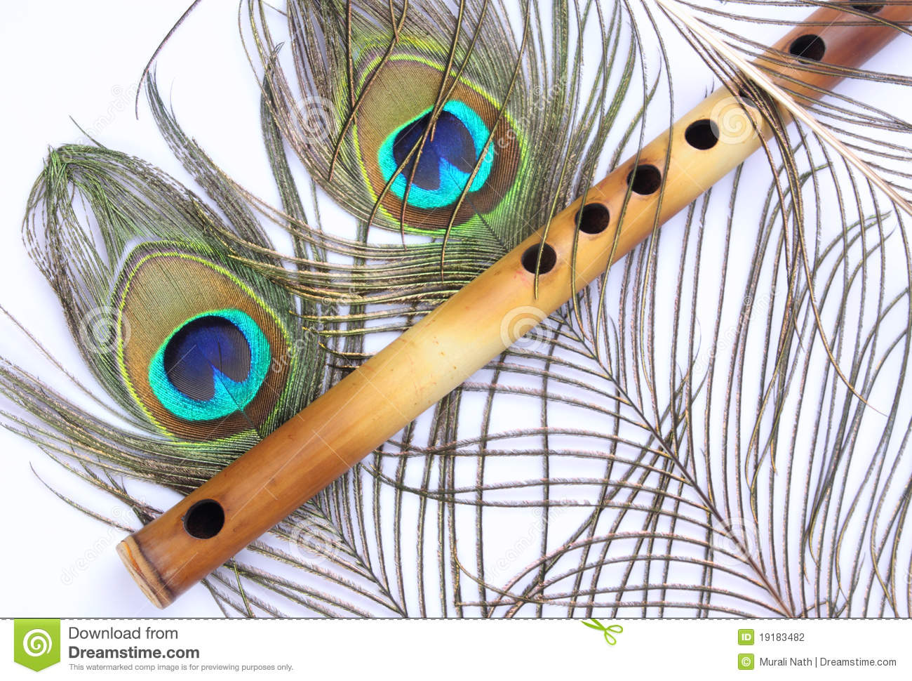 Peacock feather indian flute stock images 15 photos peacock feather with indian flute on white background stock photography biocorpaavc Gallery