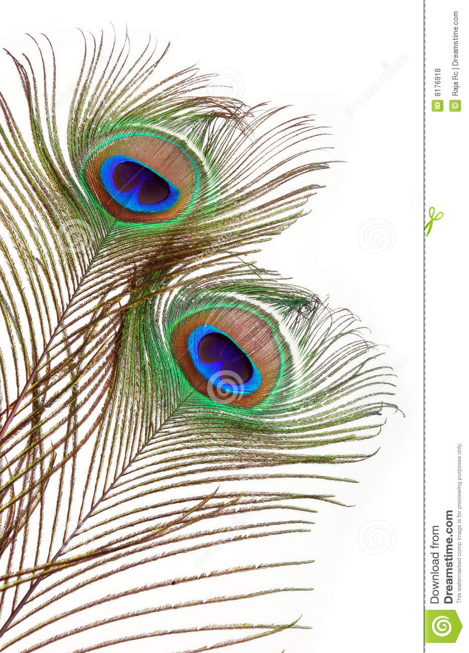 Peacock Feathers Royalty Free Stock Photos - Image: 8176918