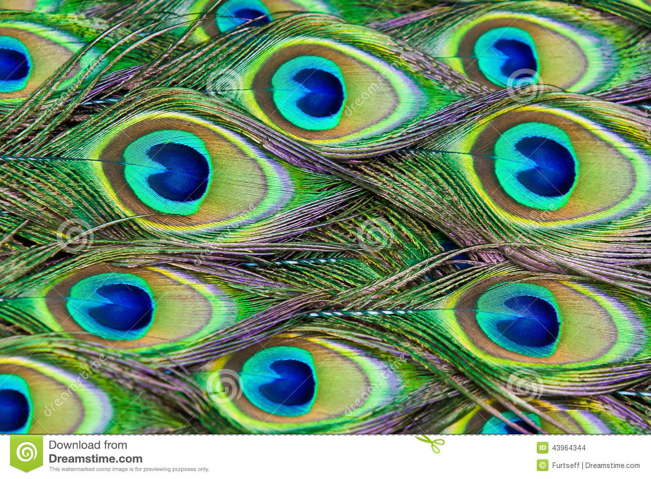 Peacock Feathers Stock Photo Image 43964344