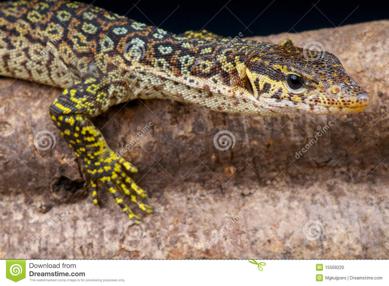 peacock monitor stock photo image 15569220 monitor clipart images monitor clipart png