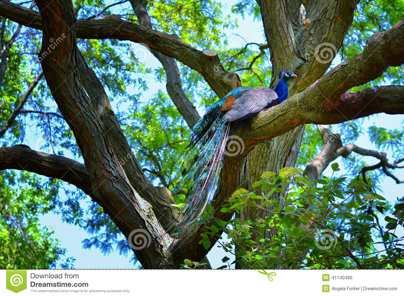 the highest branch on the tree The tree should naturally fill in that open area at the top of the tree to make it more symmetrical the branches and leaves are designed to grow and reach out for sunlight, so likely one of those top branches should elongate to fill the gap.