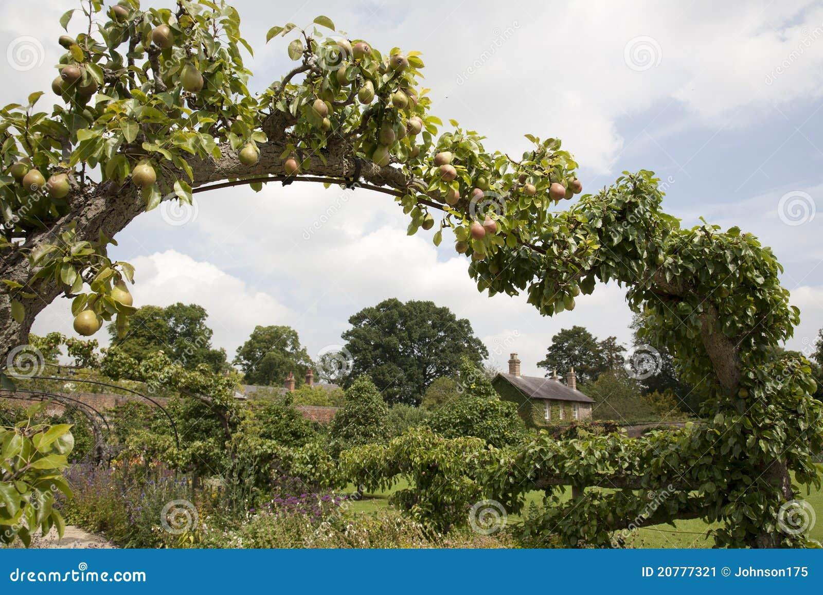 Pear Arch in Cottage Garden