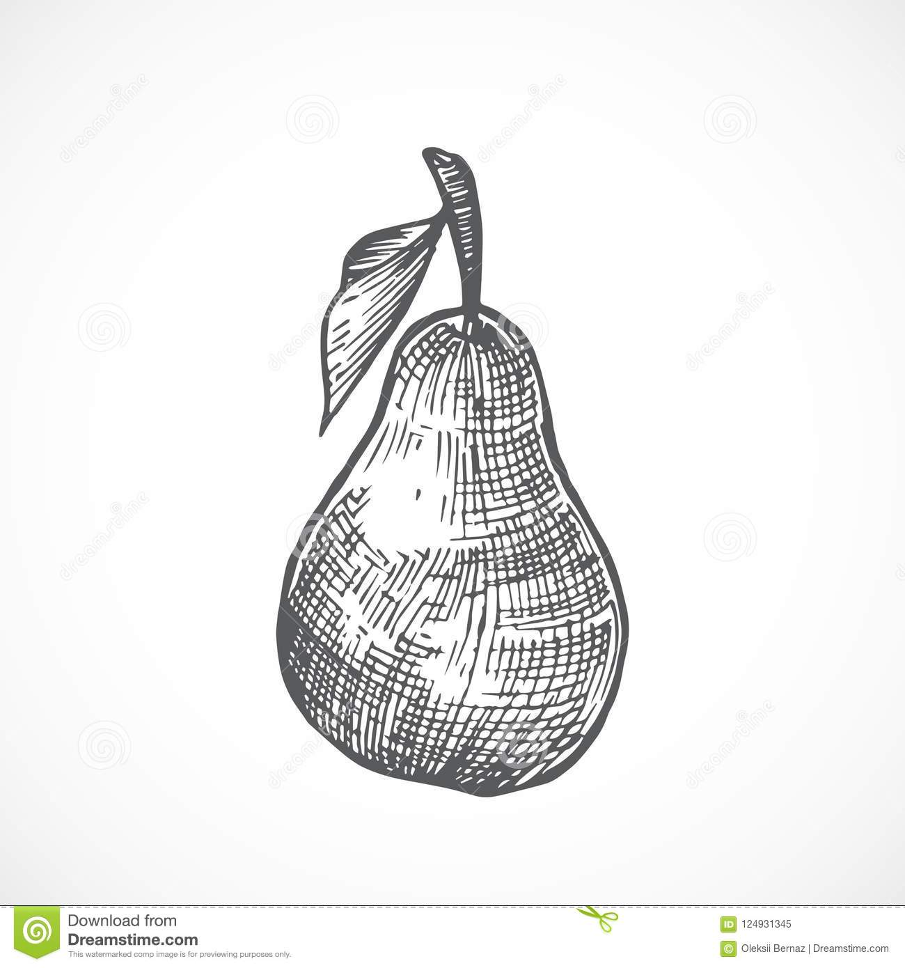 Pear with leaf hand drawn vector illustration abstract fruit sketch