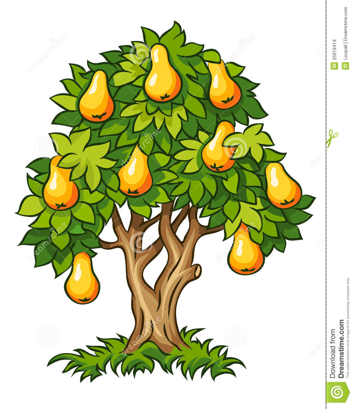 Pear Tree With Ripe Fruits Stock Images Image 25919414