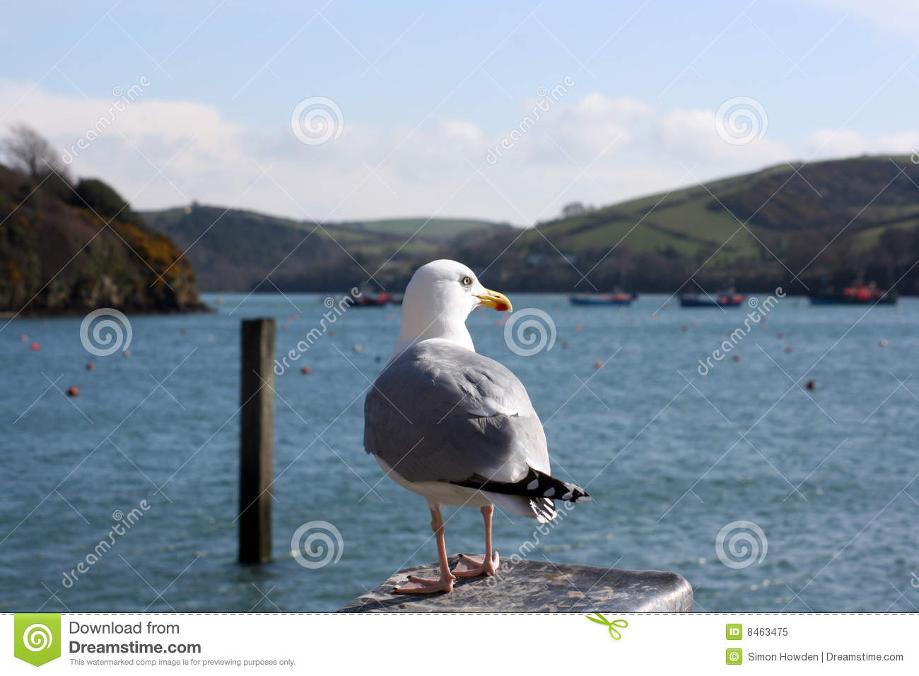 Pearching seagull