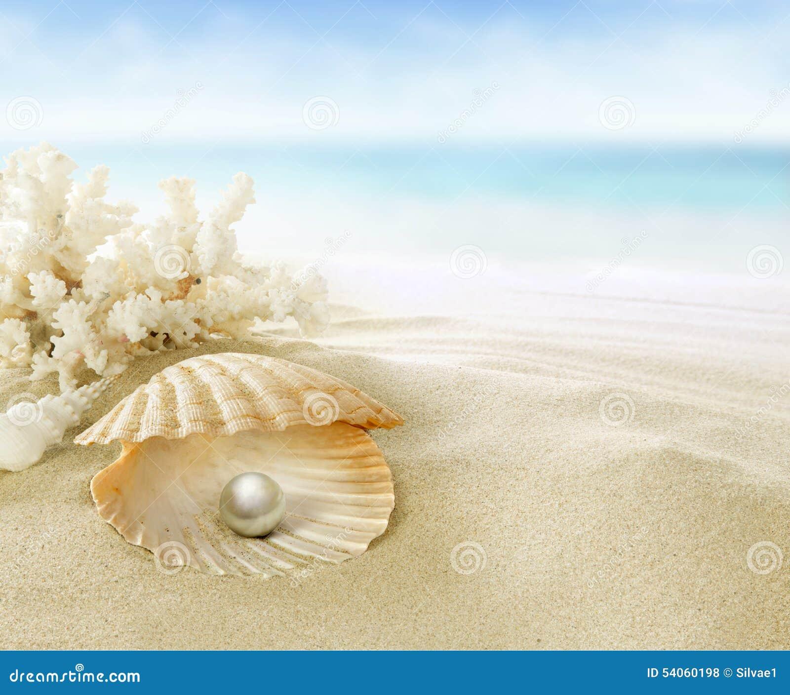 pearl in coral reef stock photo image 54060198 Owl Drawings Art Beautiful Owl Art