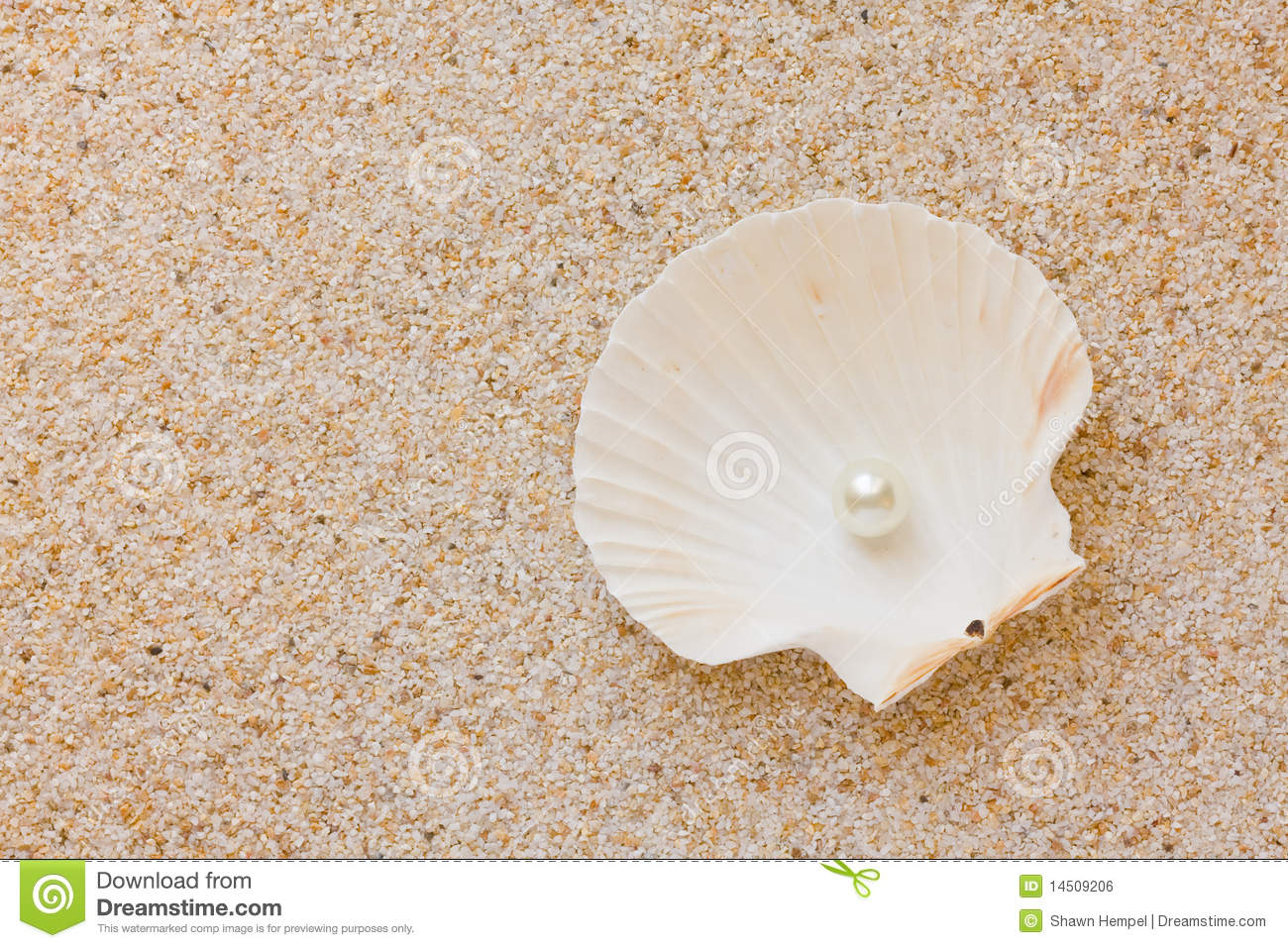 Pearl In Sea Shell Royalty Free Stock Image Image 14509206