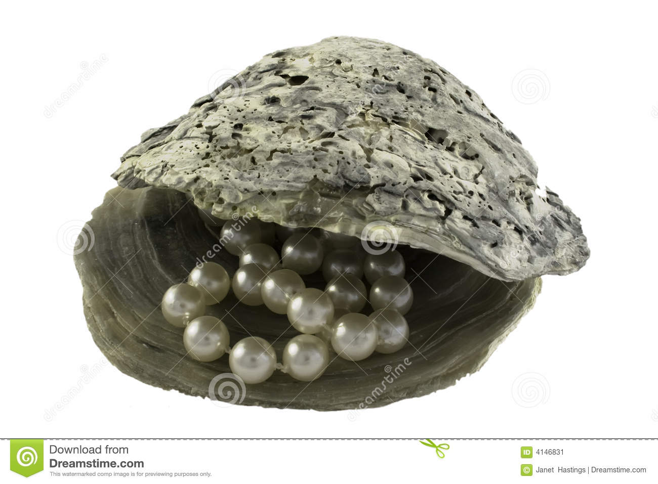 Open Oyster Shell With Pearl Pearls in oyster shell Open Oyster Shell With Pearl