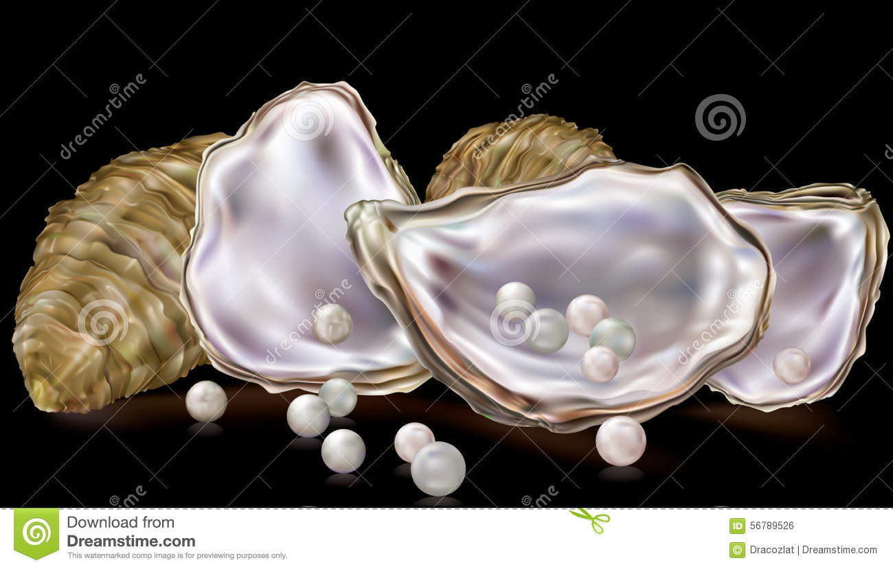 Pearls In The Oyster Shell Stock Vector - Image: 56789526