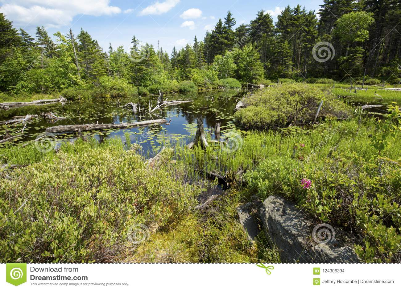 Peat bog near the summit of Mt. Sunapee, New Hampshire.