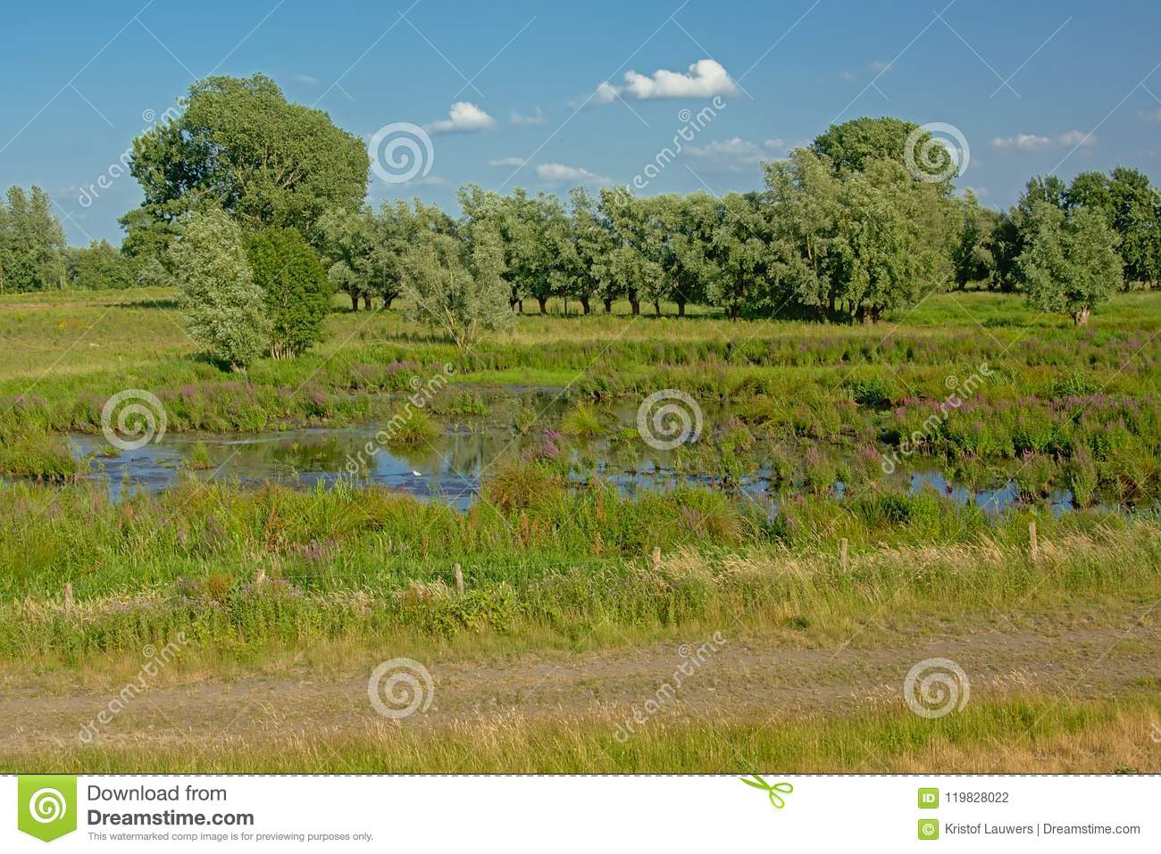 Peat lake in a wetland landscape trees in Kalkense Meersen nature reerve, Flanders, Belgium