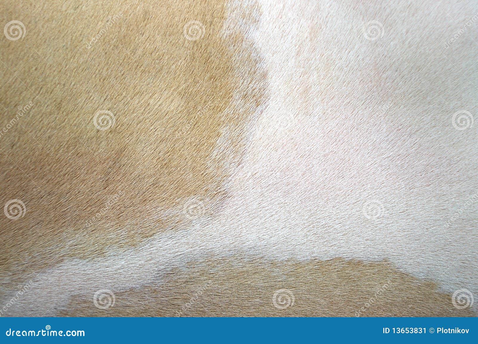 Peau beige et blanche de vache image stock image 13653831 - Peau de vache blanche ...