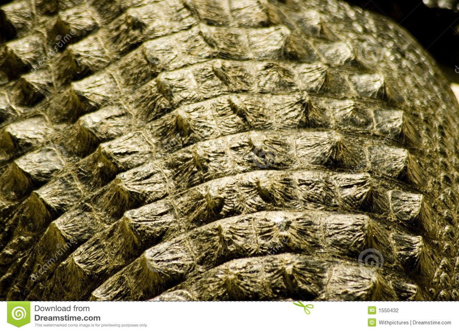 Peau d alligator