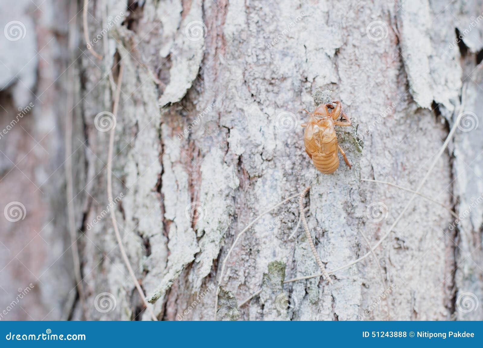Peau d 39 insecte sur le fond d 39 arbre et en bois photo stock for Insecte attaquant le bois