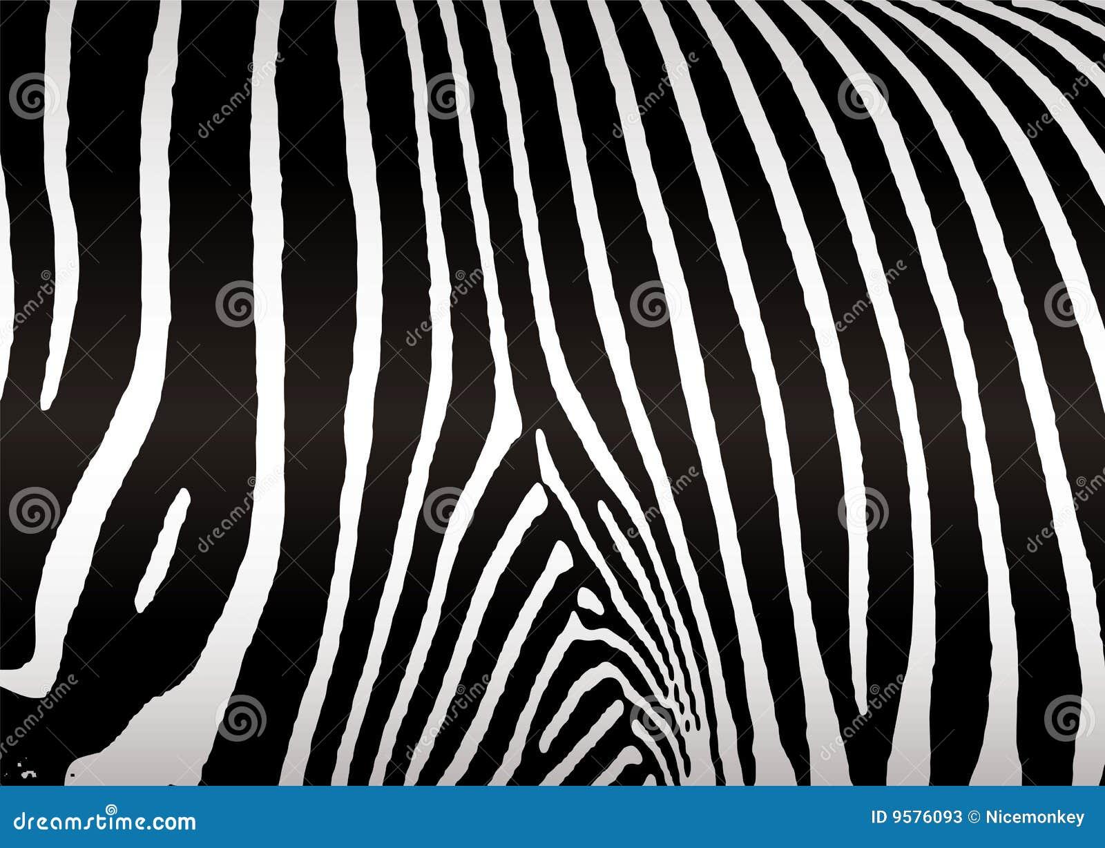 Peau de z bre photos stock image 9576093 - Peau de zebre ...