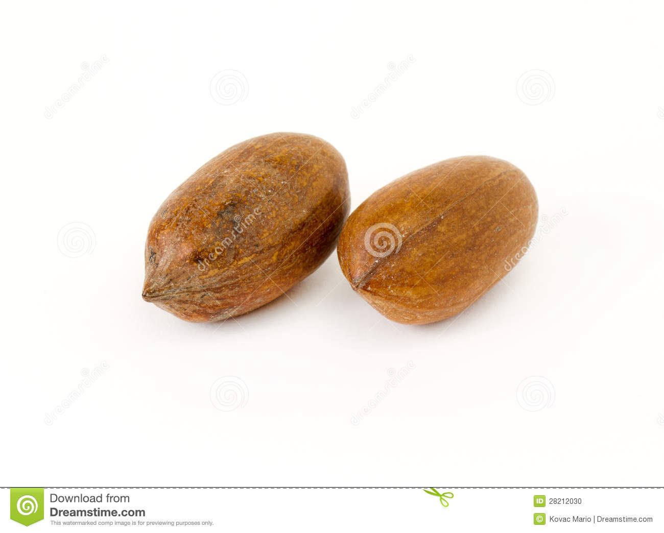 Pecan Nut Stock Photo Image 28212030