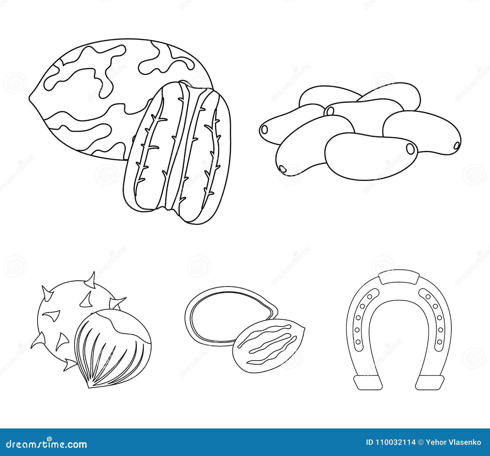 Pecannoot, pijnboomnoot, pompoenzaden, kastanje Verschillende soorten pictogrammen van de noten de vastgestelde inzameling in het