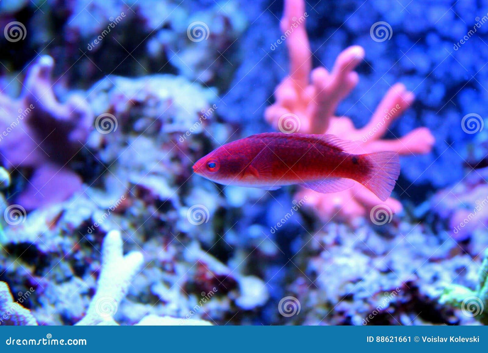 Peces Marinos En Acuario Marino Imagen De Archivo Imagen De Coral